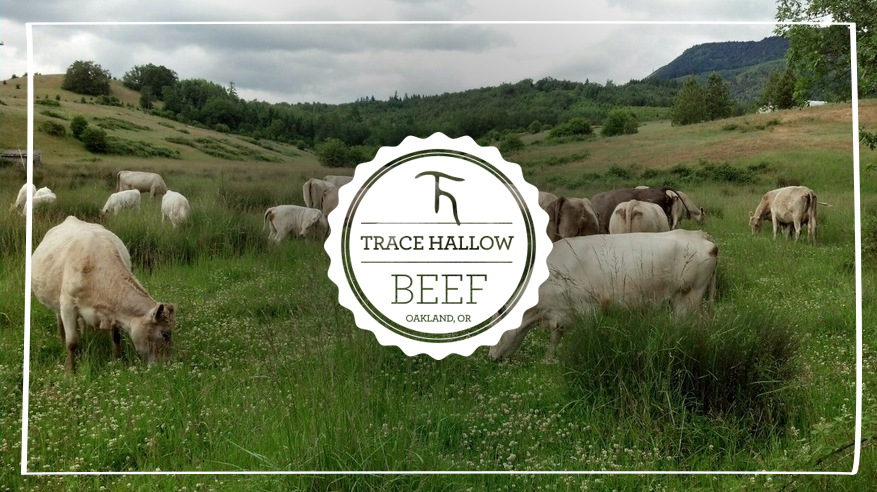 Trace-Hallow-Ranch-Cows_marquee.jpg