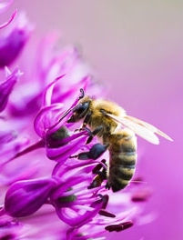 bee-on-flower.jpg