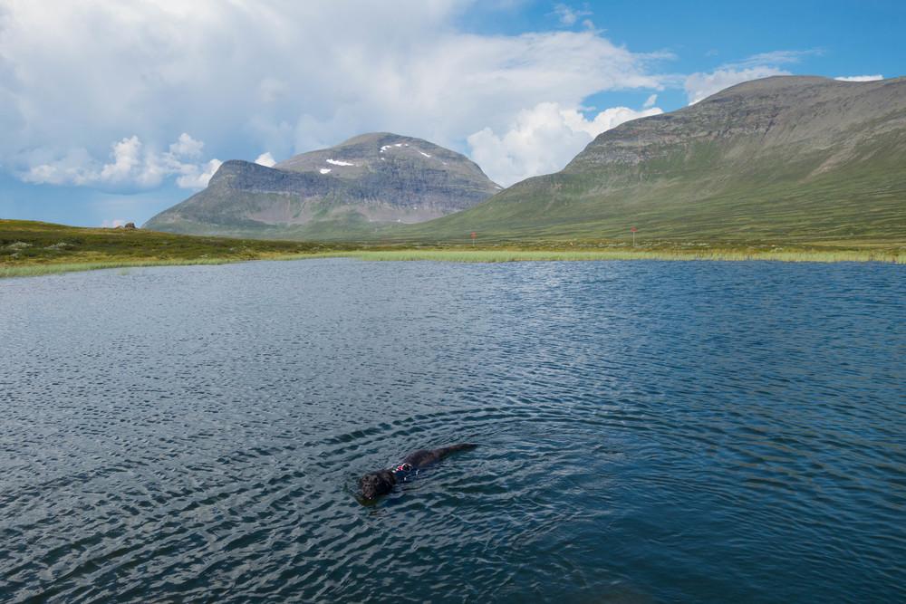 Valle i en av de större sjöar vi hittade söder om Helags