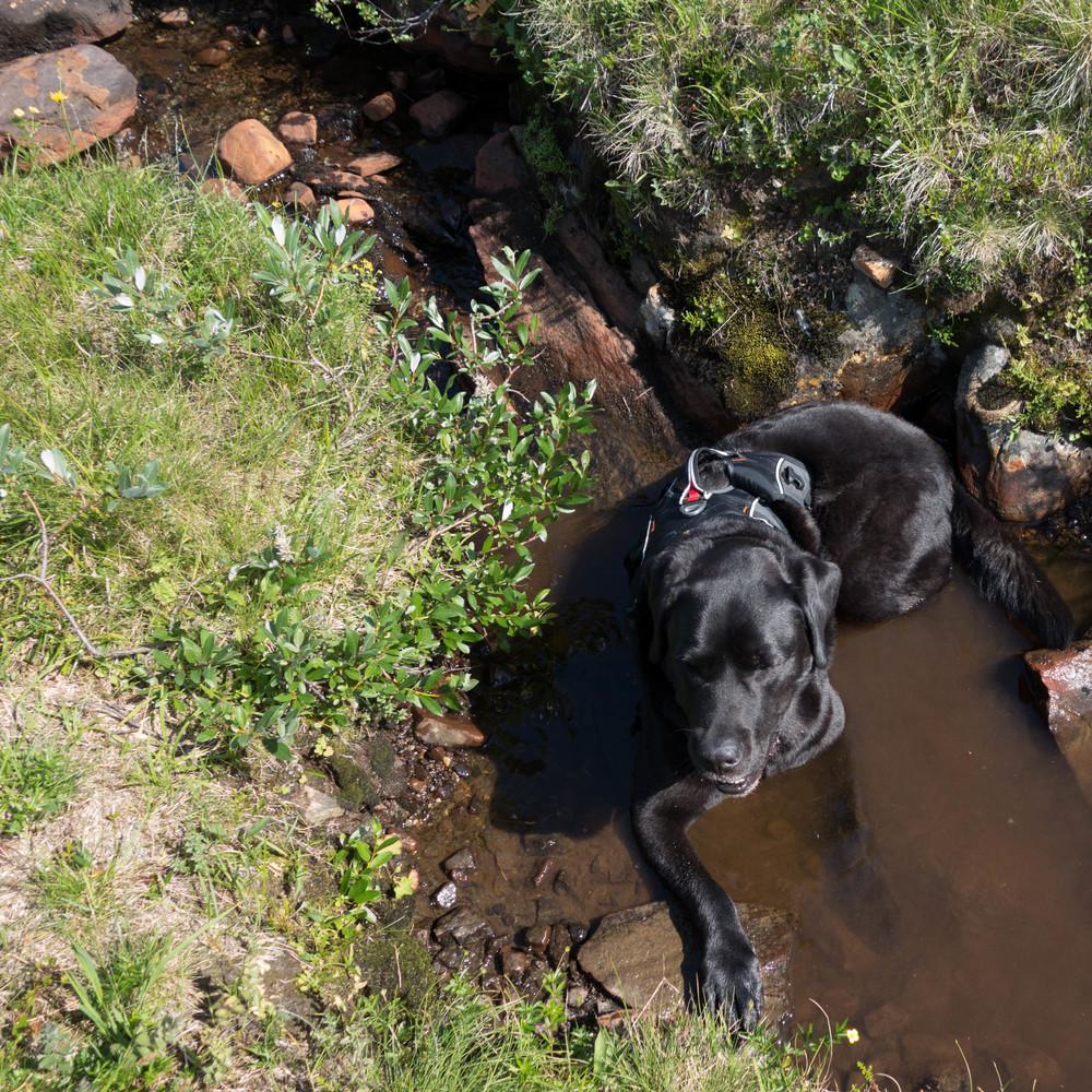 Valle vilar i bäcken