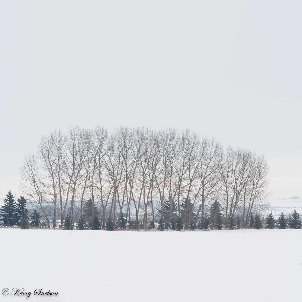 Winter Tree Grove