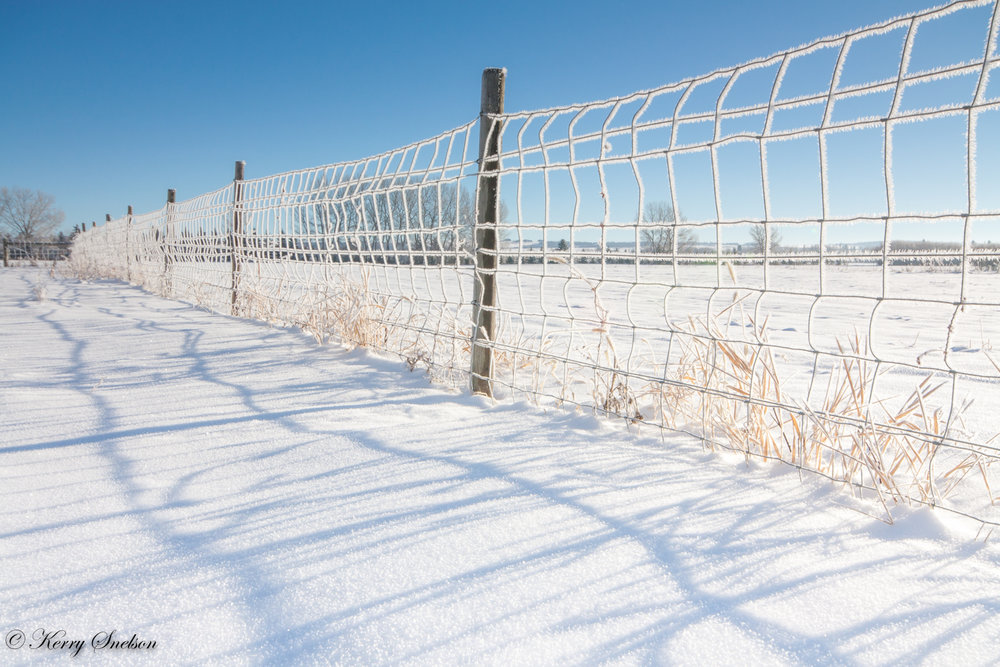 Fence Covered in Hoarfrost