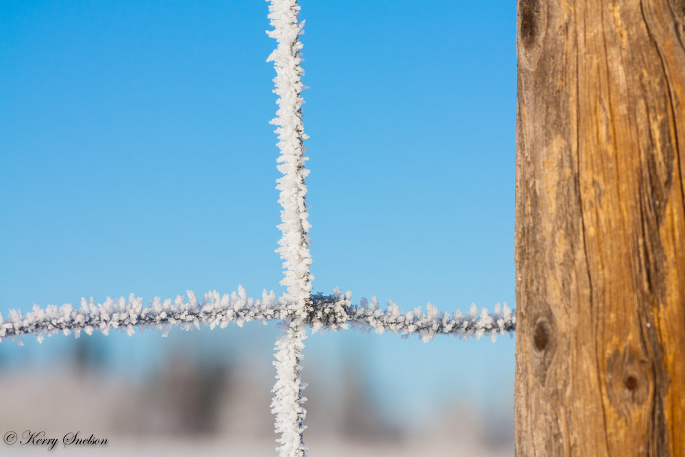 Close-up of a Fence Covered in Hoar Frost