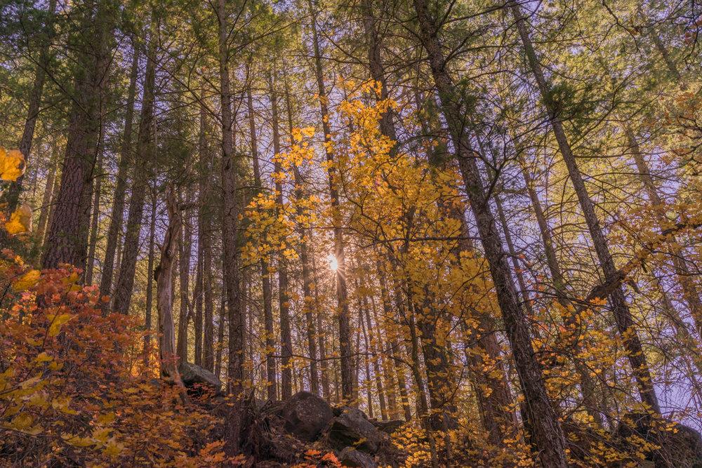 Sunburst through Autumn Trees