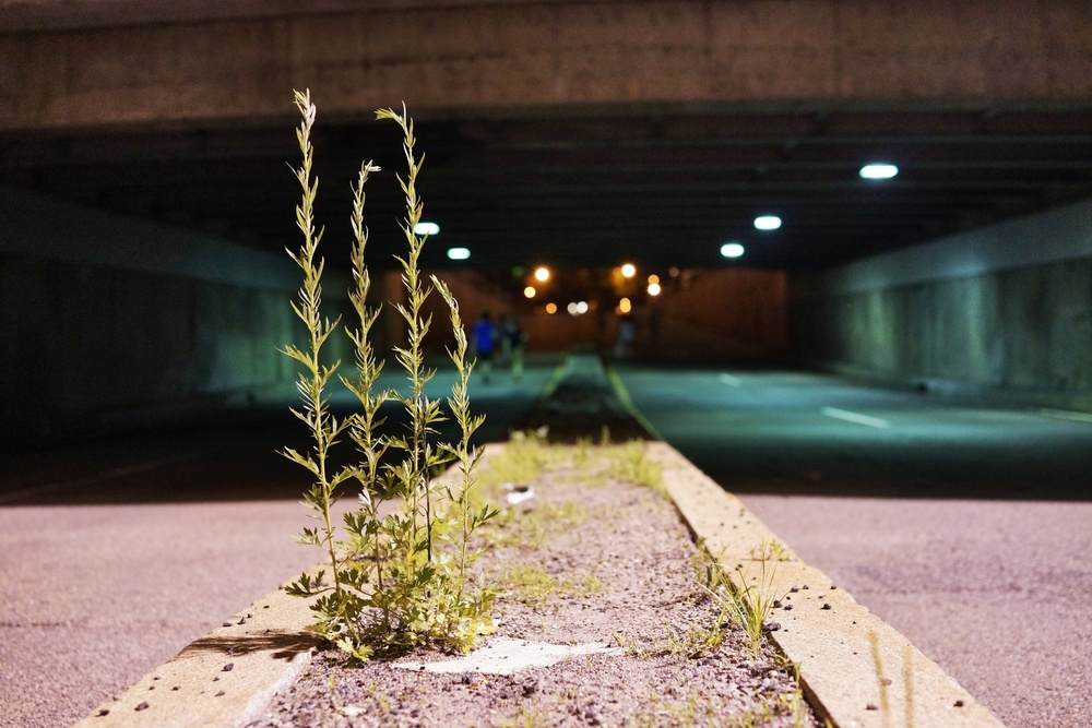 DSC03206_Snapseed.jpg