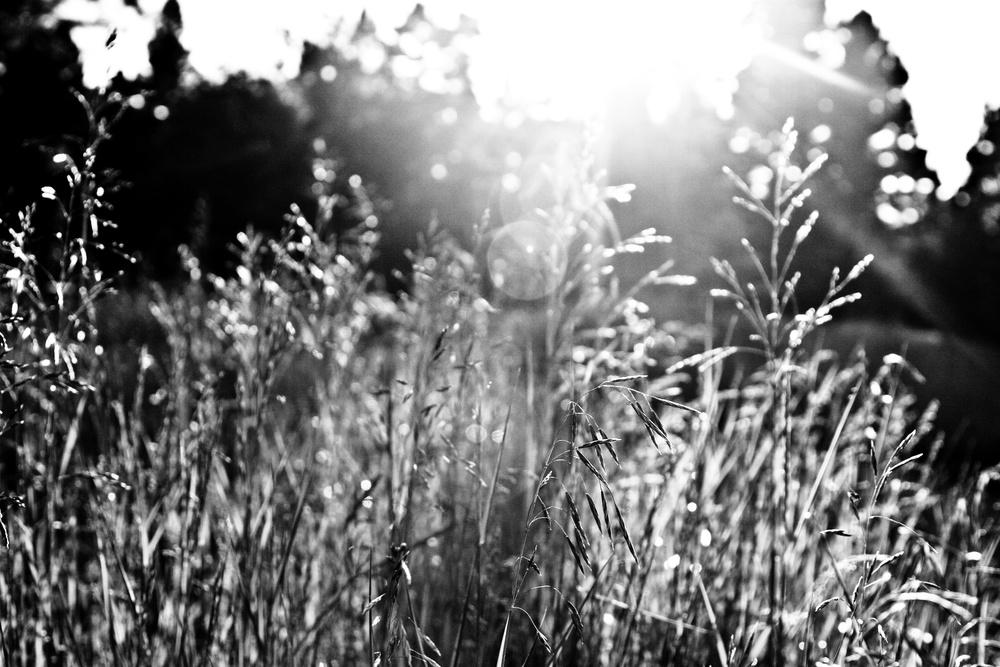 cabin grass knee high_Snapseed.jpg