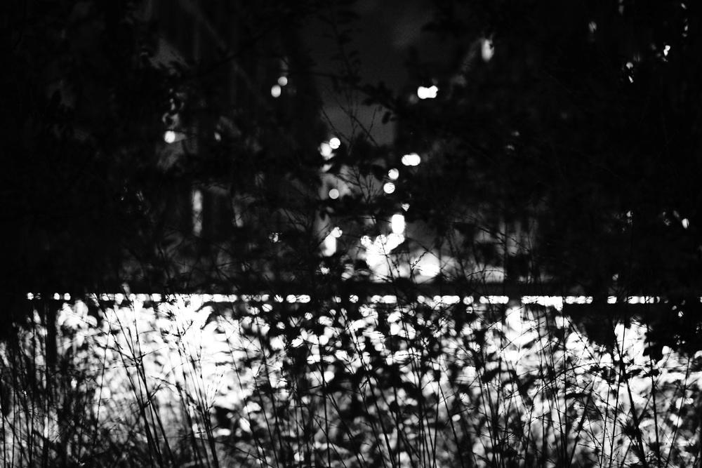 DSC09919_Snapseed.jpg