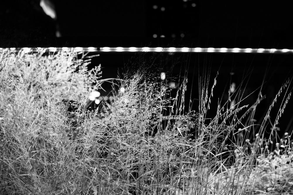 DSC09973_Snapseed.jpg