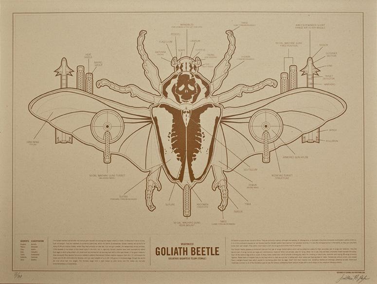 goliath_beetle_01.jpg