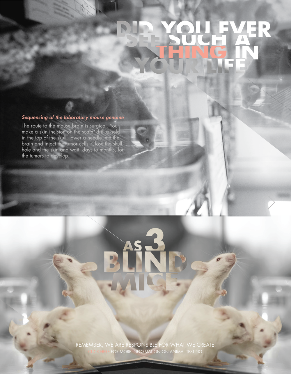 3 Blind Mice - Squarespace_Covers-13.png