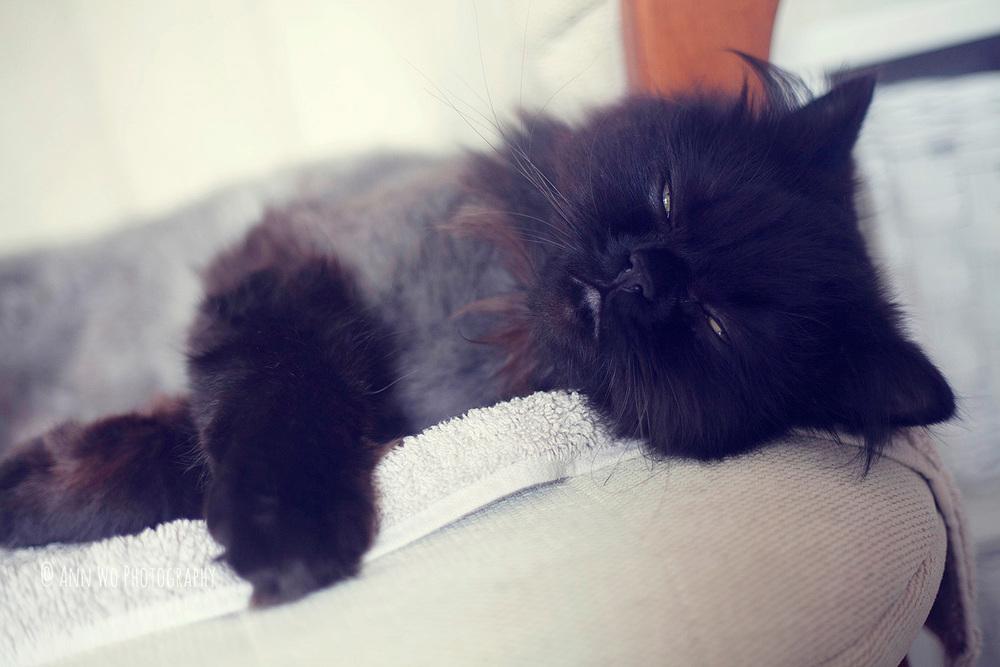 newborn photography ascot ann wo08.jpg