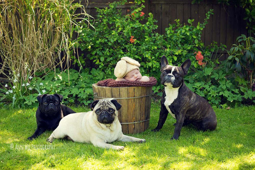 newborn baby and 3 dogs ann wo photographer london