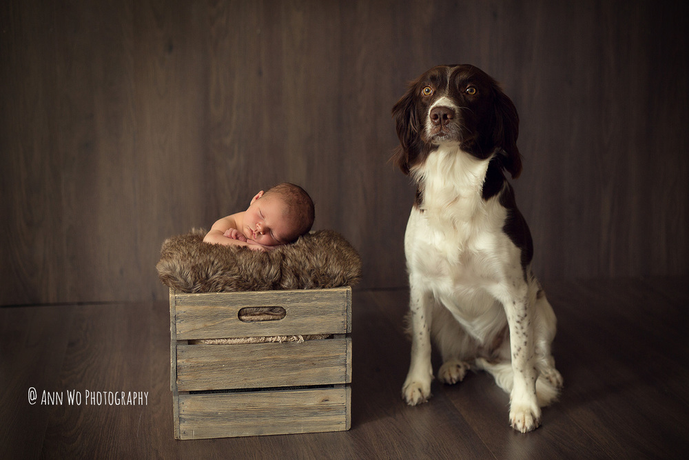 ann-wo-newborn-photo-preview-dog-5.jpg