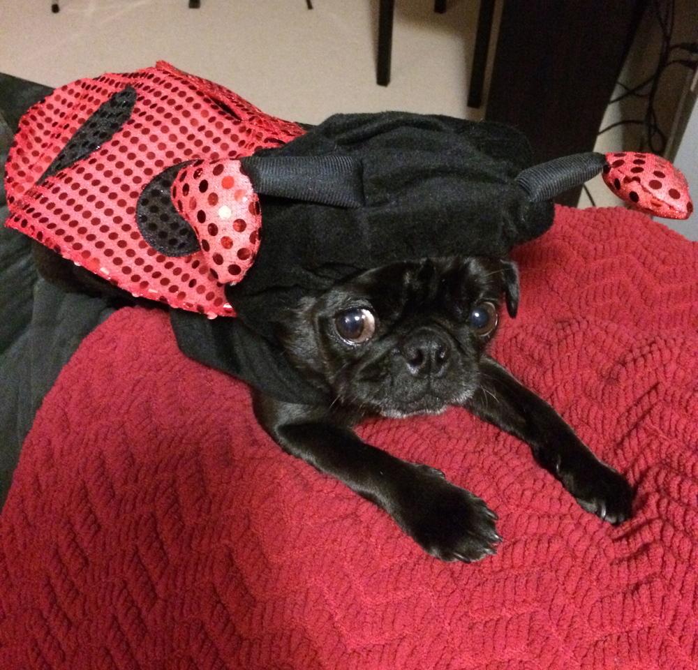 Penelope, the ladybug