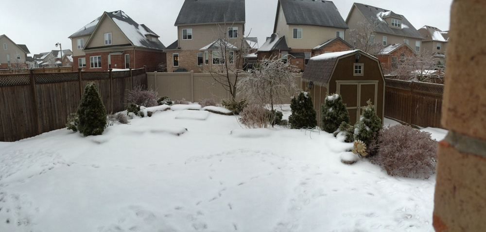 Our backyard from some time this morning