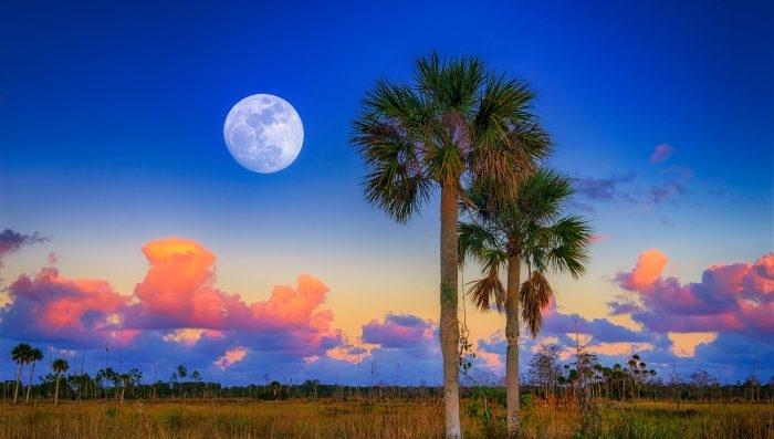 Moon rise glades.jpg