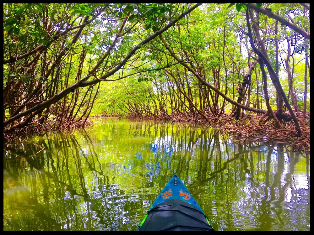 Explore the Mangroves of the 10,000 Islands NWR and Rookery Bay