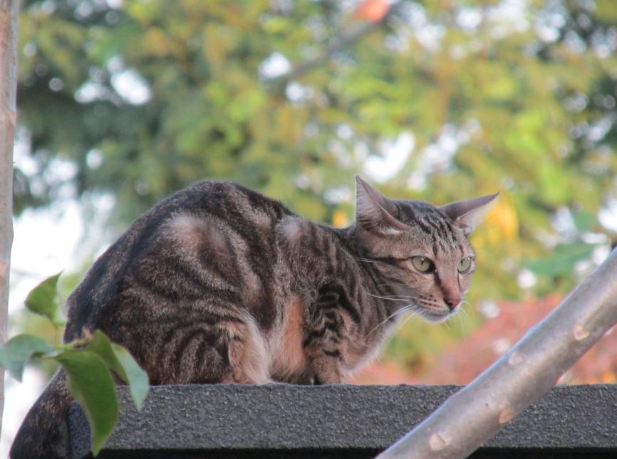 BALI-MOMMA-CAT.png