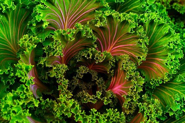 vegetables_1437596724.jpg