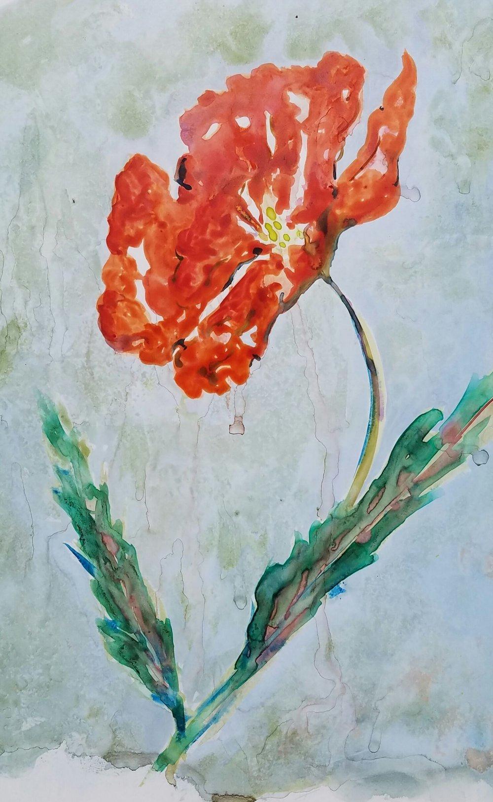 1707 Spring Poppy.jpg