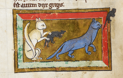 Cats were actually beloved pets which dealt with pests such as rats in Medieval times.