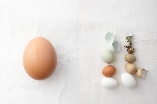 wolf_egg3