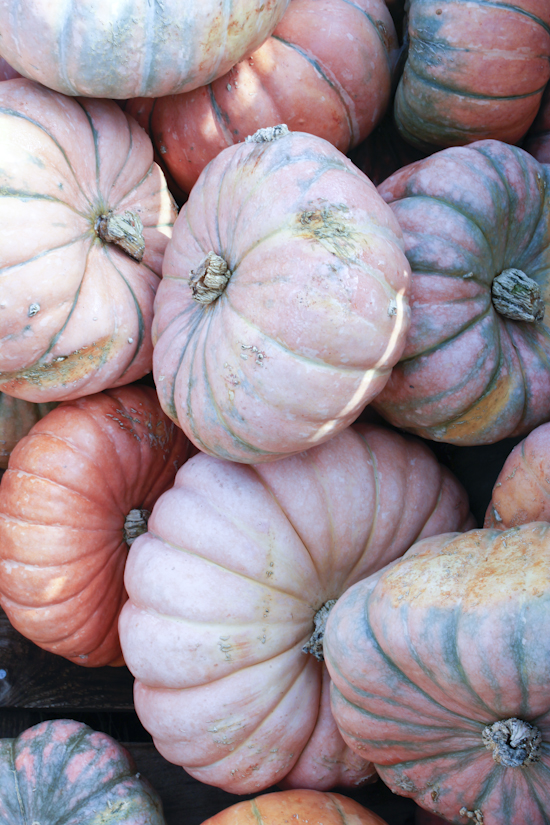 pumpkinfarm-1