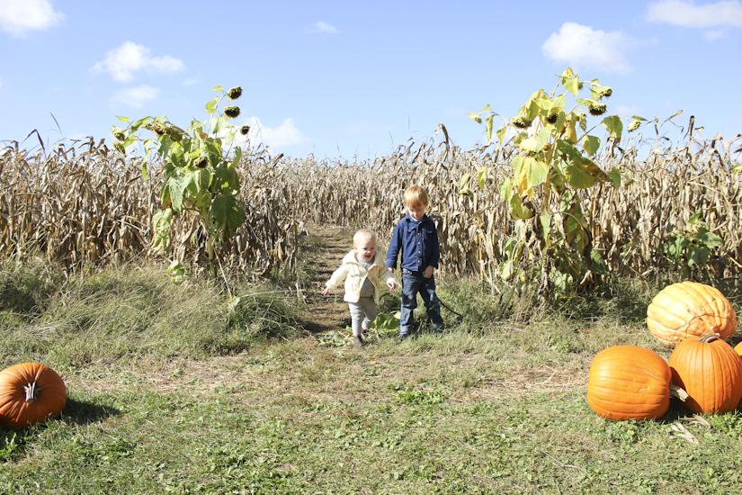 pumpkinfarm-6