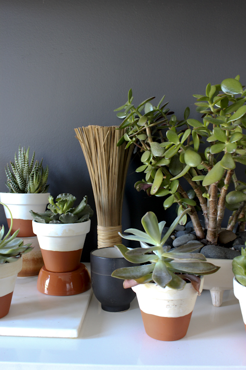 succulents-4