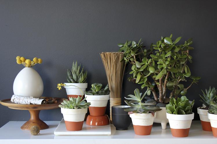 succulents-5