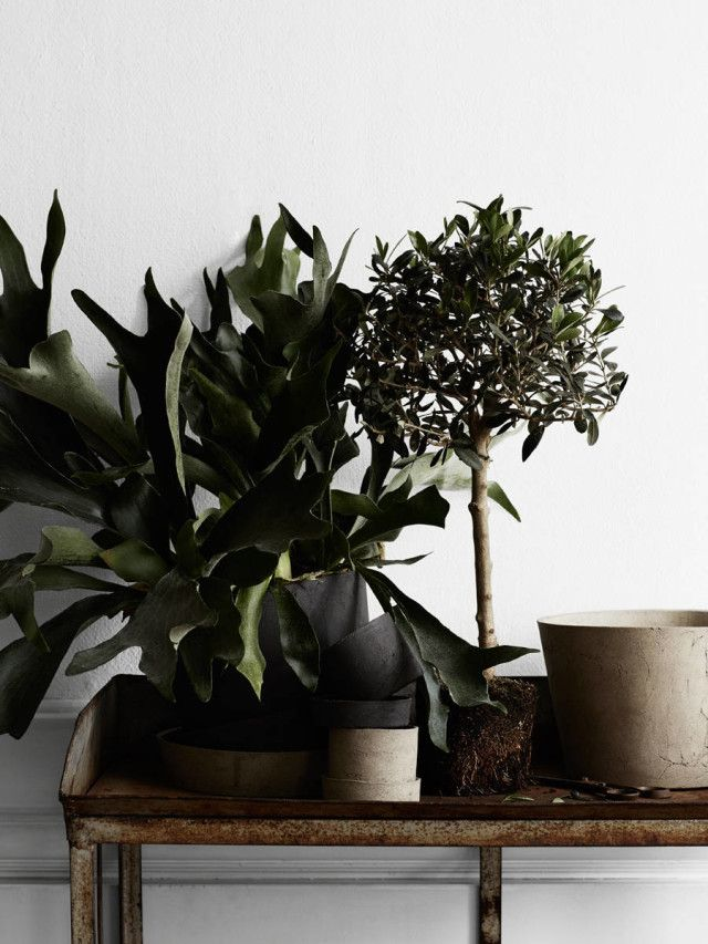 Stylist,  Lotta Agaton , Photo,  Kristoffer Johnsson