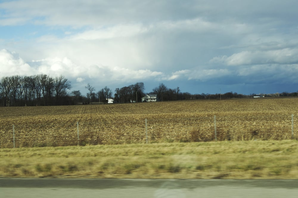 Are those cornfields?
