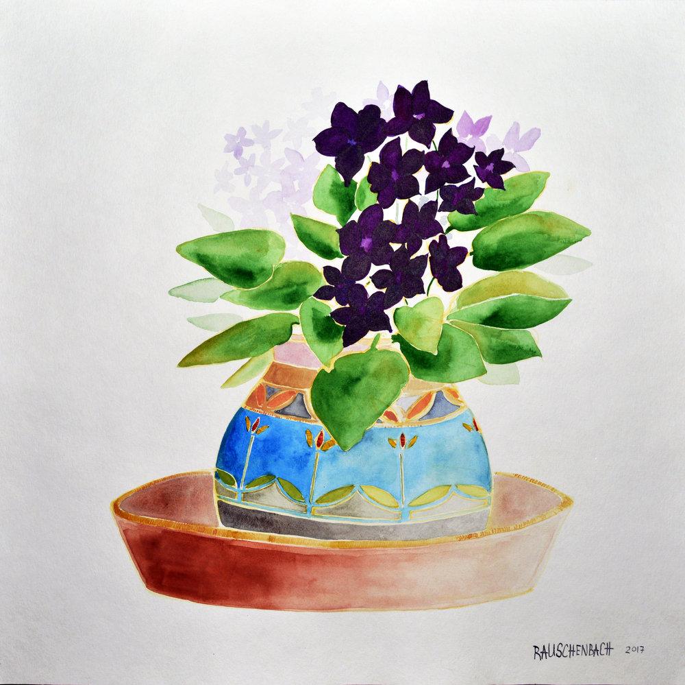 Grandmother African Violets