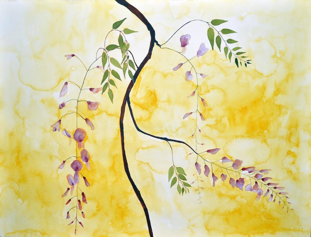 YellowWisteria-Watercolor-2017.jpg