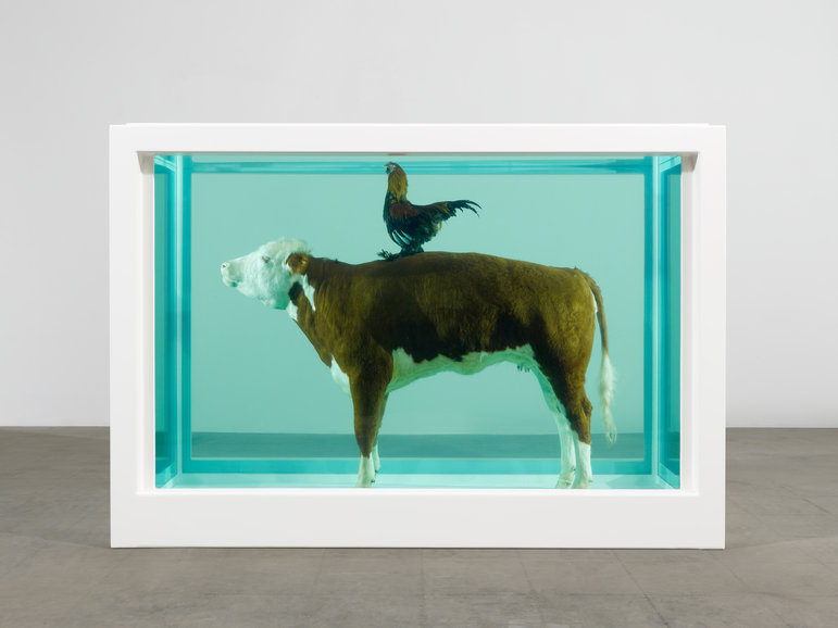 Cock and Bull, 2012    Glass, painted stainless steel, silicone, bull, cockerel and formaldehyde solution,  90.9 x 130.9 x 54.4 in    Image: Photographed by Prudence Cuming Associates © Damien Hirst and Science Ltd. All rights reserved, DACS 2012