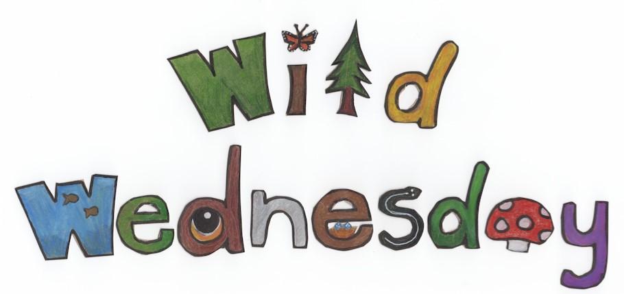 Wild Wednesday Image.jpg