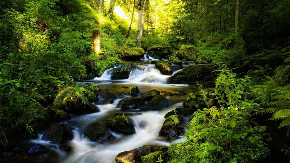 river-and-green-forest.jpg