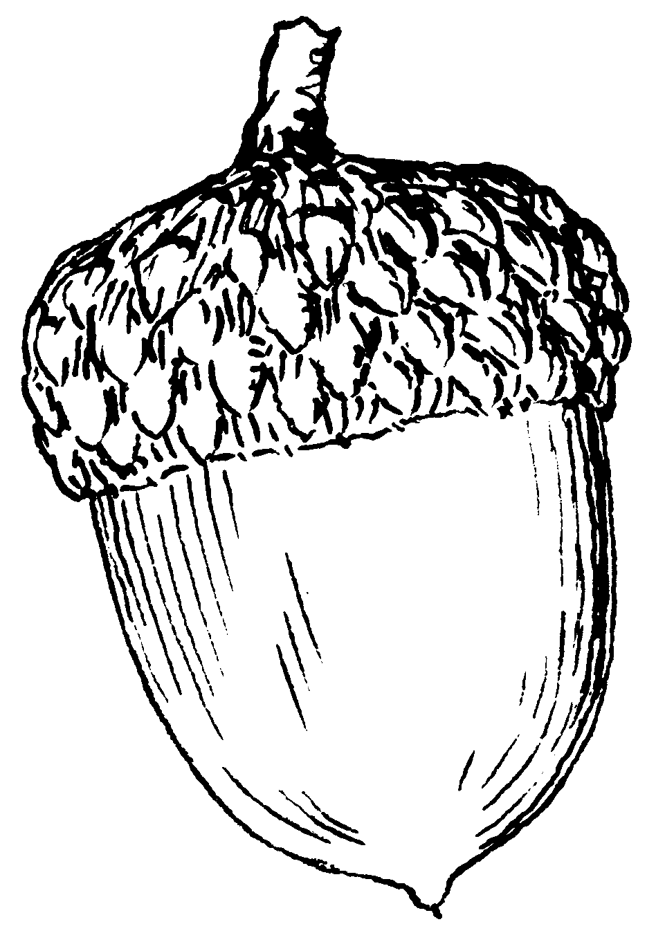 acorn eagle rock