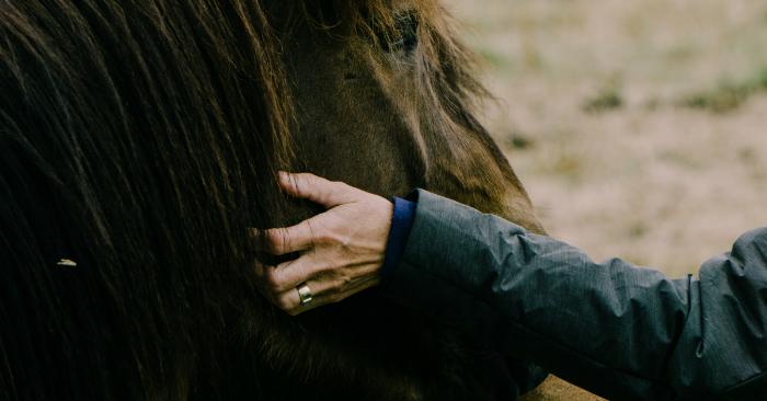 horseretreat.png