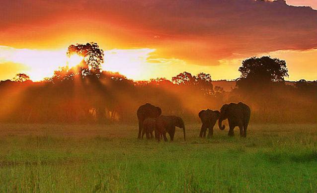 elephantherdsmall.jpg
