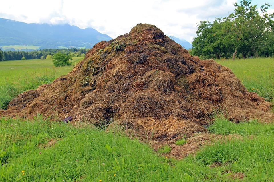 Montón de compost, en proceso de degradación de la materia orgánica y transformación en mineral, siendo de esta manera aprovechable como abono