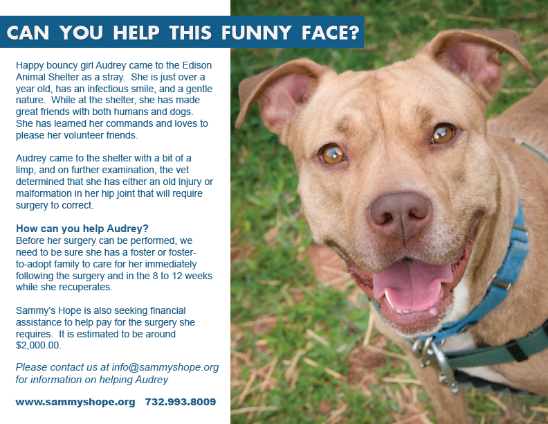 Audrey's Original Flyer-- we are still looking for a Forever Home for our girl, Audrey!