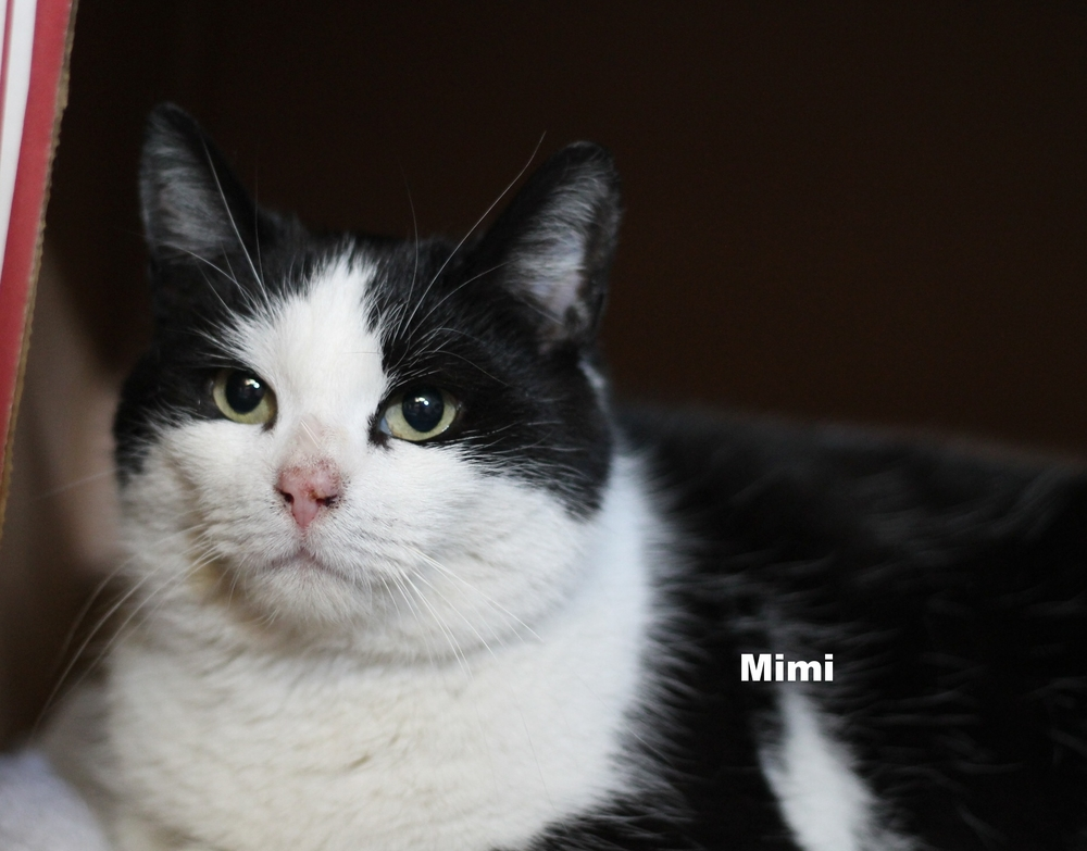 Mimi (1).JPG