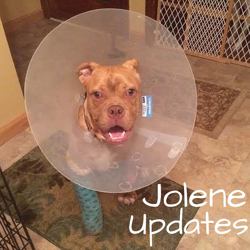 Keep up to date with jolene's progress