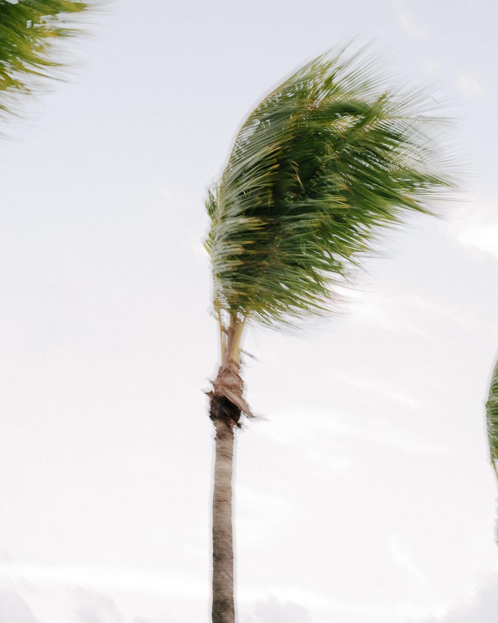 9-Florida_0603.jpg