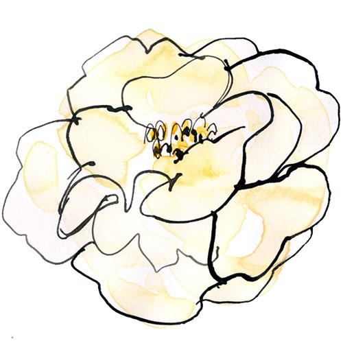 Capricorn - White Camellia.jpg