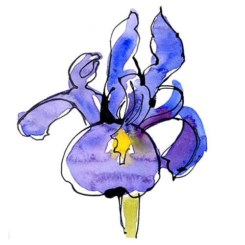Sagittarius - Iris.jpg