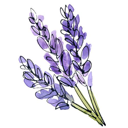 Pisces - Lavender.jpg