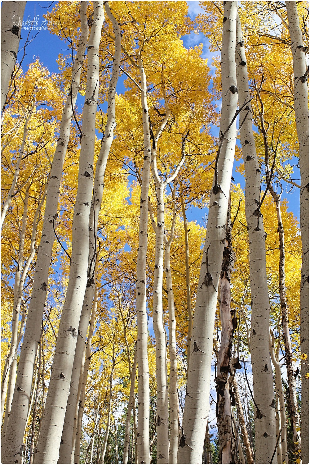 Colorado - Aspen Grove in Dillion Valley_0038.jpg