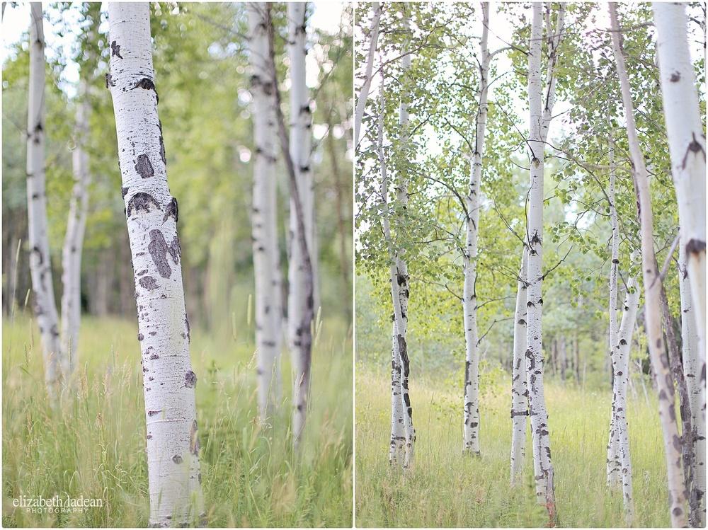Colorado-Conifer+Evergreen-ElizabethLadeanPhotography--_6060.jpg